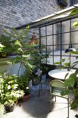 Foliage plants on terrace with vintage garden furniture
