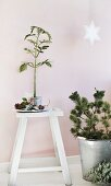 Advent arrangement of plant, zinc bucket, white stool and star decoration