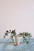 Plant in ceramic container with saucer against pastel background