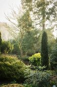 Trees, bushes and shrubs in mature garden