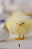 Fluffy Easter chick made from yellow feathers next to egg shell