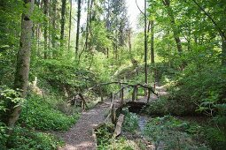 Woodland path with wooden bridge leading over stream