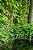 Begrünte Ziegelmauer neben Vintage Wasserbecken