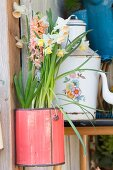 Narcissus and hyacinths in pink vintage can hung on wall