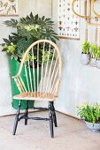 Wooden armchair and planted arrangements below vintage wall chart in summer house