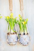 Yellow-flowering narcissus in macrame hanging baskets