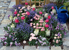 Changing bedding plant through the year
