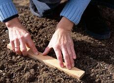 Sow corn salad, sow seeds