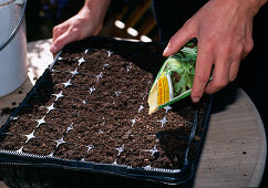 Sow corn salad and plant in balcony box