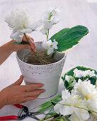 White peony arrangement