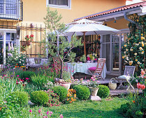 Wooden terrace at the house, Rosa, Pinus in bucket