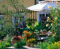 Wooden terrace with tub plants and parasol