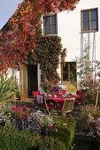 House terrace with overgrown Parthenocissus (wild wine)