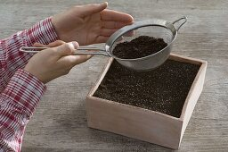Sowing of month strawberries