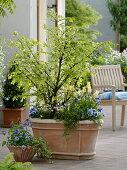 Corking spindle shrub through the seasons