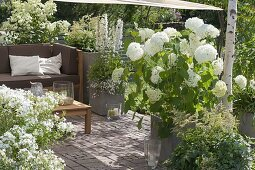 Sun-shade shaded terrace with white plants, lounge corner