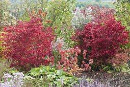 Enchanted garden corner, Euonymus alatus