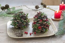 Cones of Pinus filled with red berries of Ilex