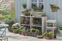 Spring terrace with vegetables and herbs