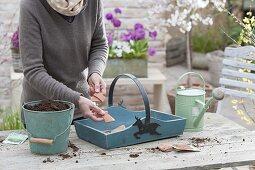 Put radishes in wooden basket