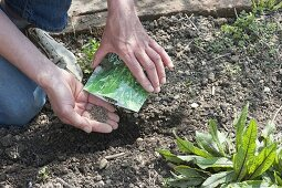 Vegetable sowing in organic garden