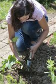 Woman planting zucchini after the ice saints in the bed