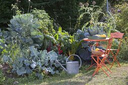 Mount vegetable bed in late summer with Brussels sprouts, broccoli, Swiss chard