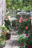 Small rose balcony with sitting area, pink (rose, dwarf rose)