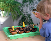 Sprinkling the seeds