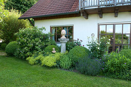 Flower bed near the house with Buxus, balls, Hydrangea petiolaris