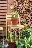 Potted yellow narcissus on pastel yellow metal chair arranged in front of stacked firewood
