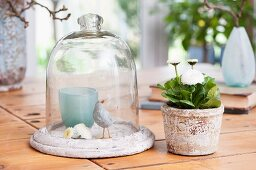 Bird ornament under glass cover next to potted Bellis