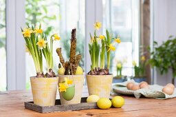 Arrangement of Narcissus and dyed Easter eggs on table