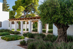 Arcade leading through Mediterranean garden with beds of lavender