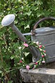 Wreath of carnations leaning against zinc watering can