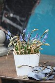 Arrangement of grape hyacinths and twigs