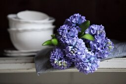 Blue hyacinths on checked cloth and crockery on shelf