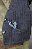 Grape hyacinths in pocket of knitted waistcoat