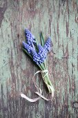Posy of grape hyacinths on rustic wooden surface