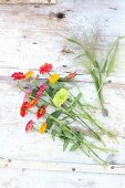 Zinnias and switchgrass on wooden table