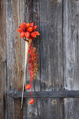 Posy of rose hips and physalis flowers on weathered door
