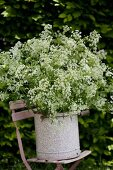 Enamel bucket of chervil on garden chair