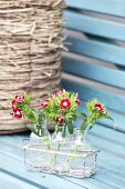 Red sweet Williams in glass bottles in wire basket