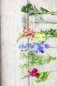 Cut cottage-garden flowers on rustic wooden surface