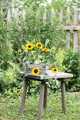 Sunflowers in glass bottles in wooden crate on wooden stool