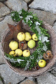 Curved arrangement of box in basket of quinces and sweet chestnuts