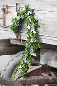 Curved arrangement of box, honesty and silver poplar