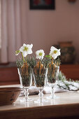 Hellebores and pine needles in wine glasses