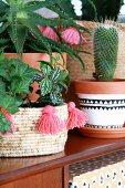 Kaktus in bemaltem Tontopf und Efeu in Korbübertopf mit roten Quasten