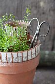 Shepherd's purse and vintage scissors in terracotta pot decorated with paper strips
